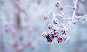 Gartenpflege im Winter
